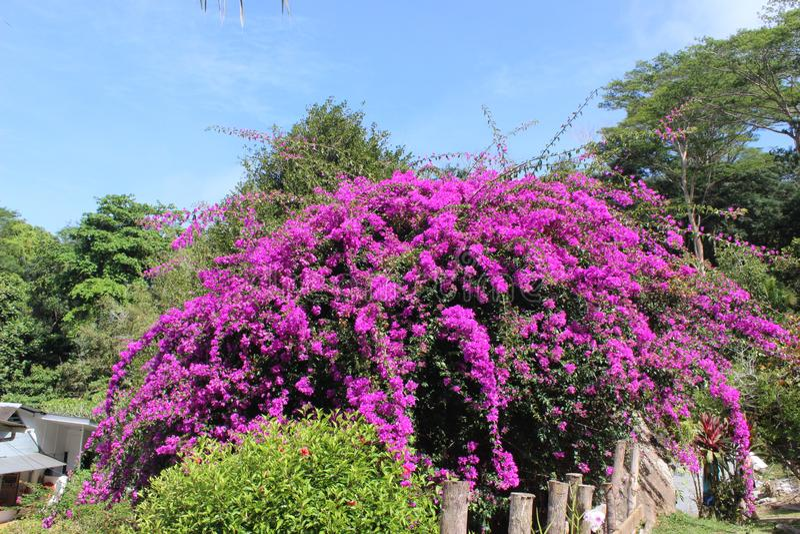 Giardino botanico Seychelles, Africa immagini stock libere da diritti