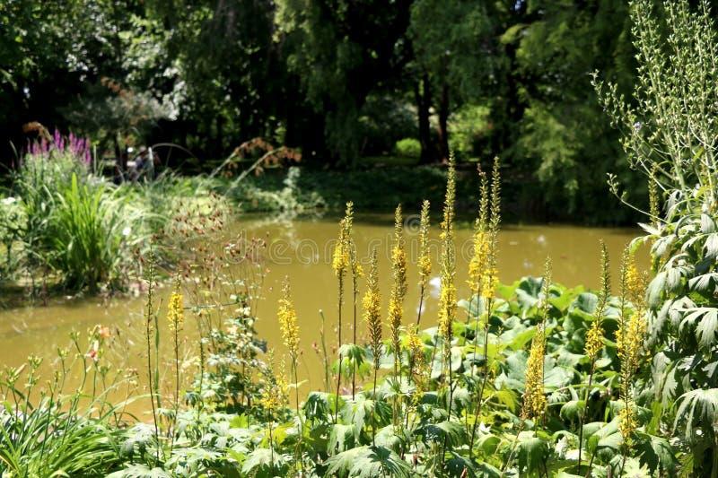 Giardino botanico a Zagabria, Croazia fotografia stock