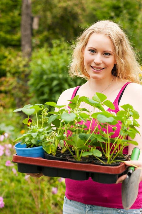 giardino che pianta la fragola dei semenzali immagini stock libere da diritti