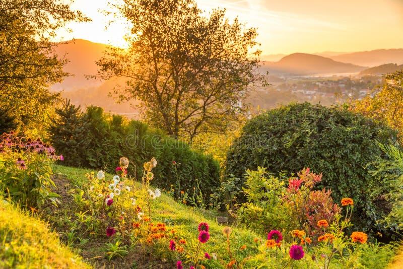 Giardino con i fiori in un tramonto fotografie stock