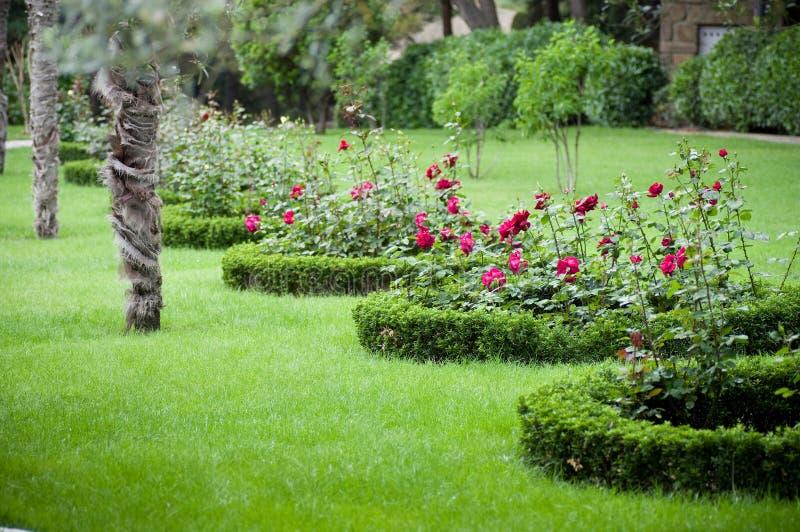 Giardino con le rose e le palme immagine stock libera da - Giardino con rose ...