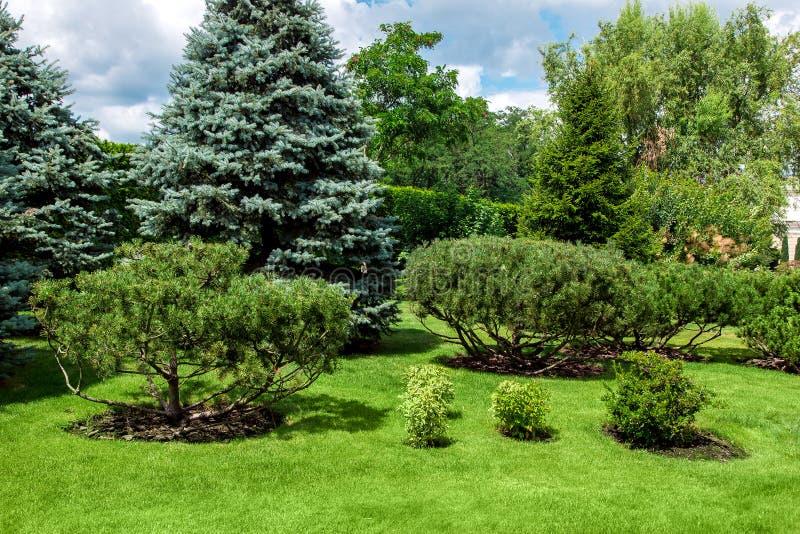 Giardino con prato inglese ed i pini verdi immagini stock