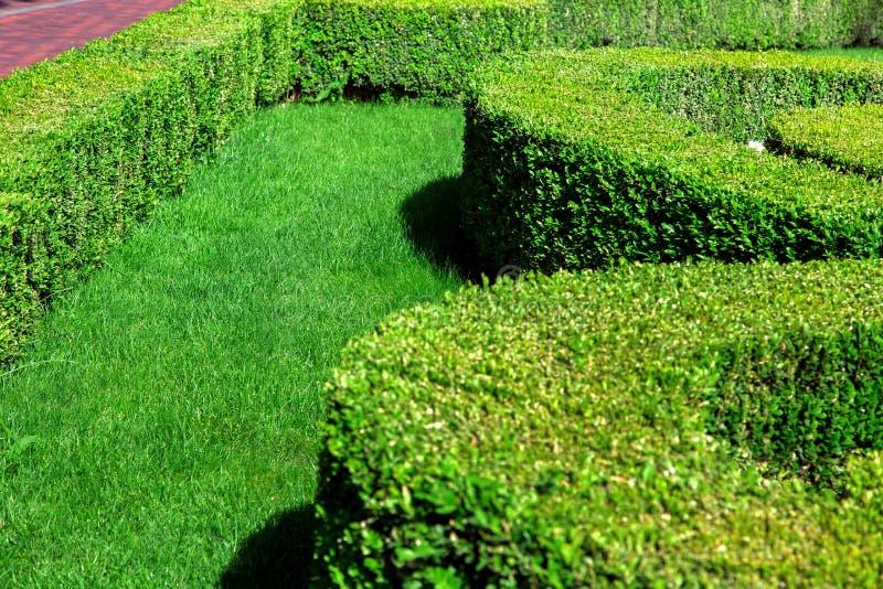 Giardino con prato inglese verde piantato con i cespugli sistemati immagini stock