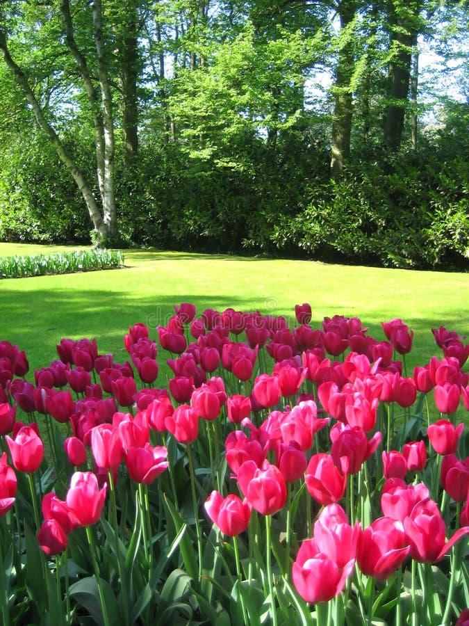 Giardino dei tulipani fotografia stock libera da diritti