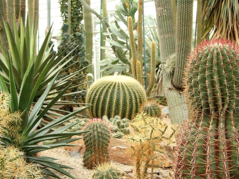 Giardino del cactus fotografie stock libere da diritti