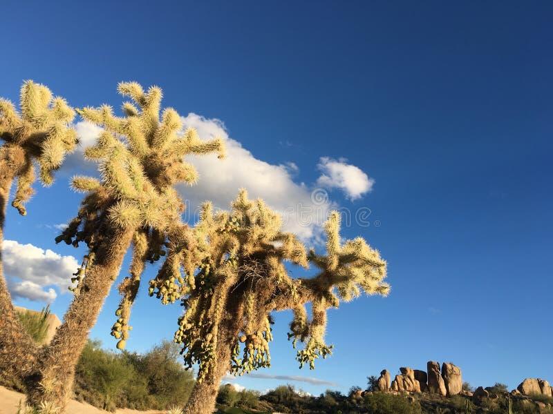 Giardino del cactus, Joshua Tree National Park fotografia stock libera da diritti