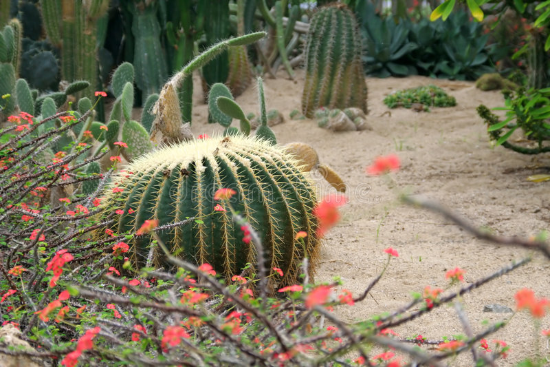 Giardino del deserto fotografie stock libere da diritti