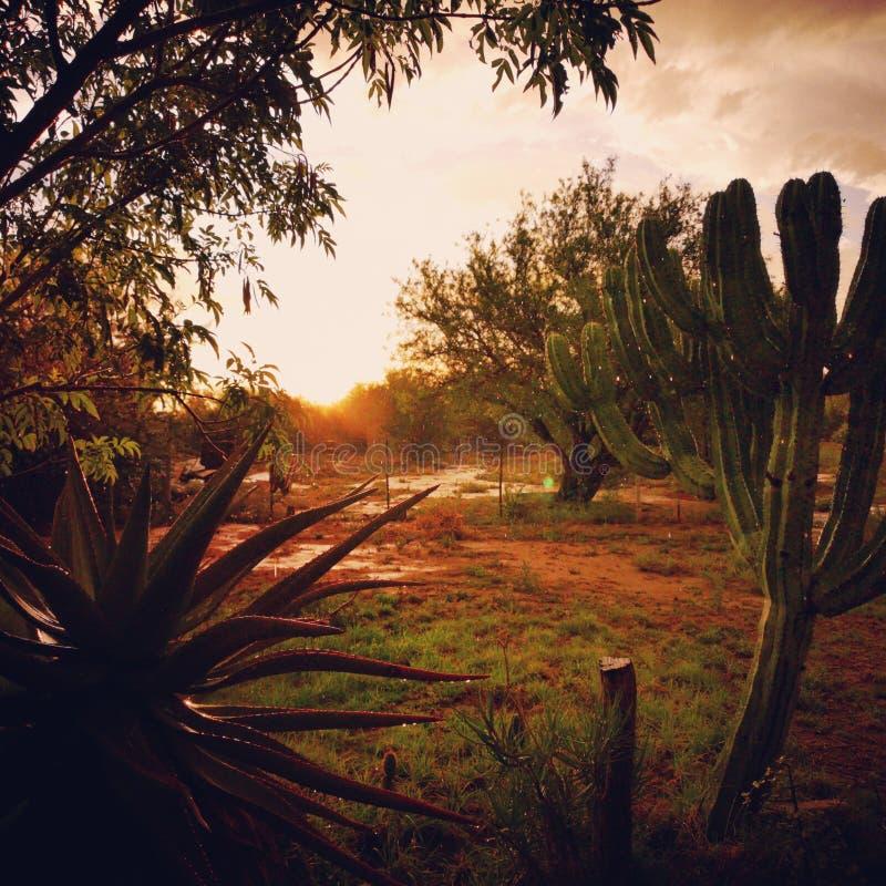 Giardino del deserto fotografia stock