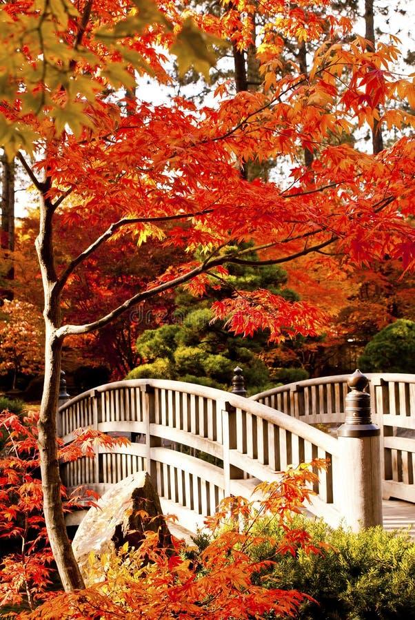 Giardino del giapponese di autunno immagine stock - Piccolo giardino giapponese ...