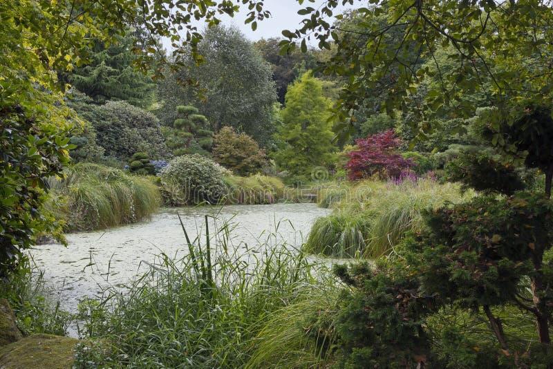 Giardino del legno decisivo in parco botanico di Bretagna superiore fotografie stock libere da diritti