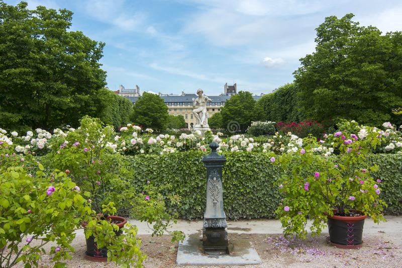 Giardino del Palais Royal, Parigi, Francia fotografia stock libera da diritti