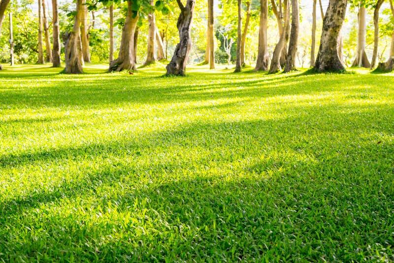 Giardino del parco del paesaggio immagini stock libere da diritti