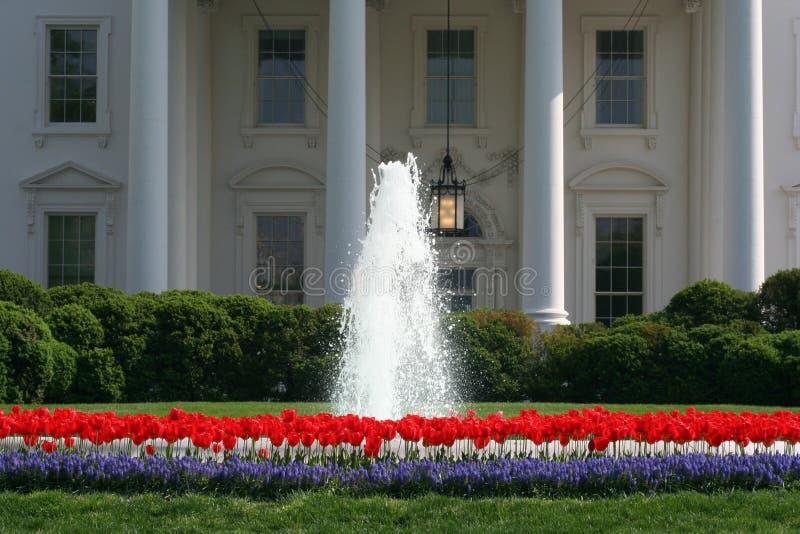 Giardino del tulipano della Casa Bianca fotografia stock