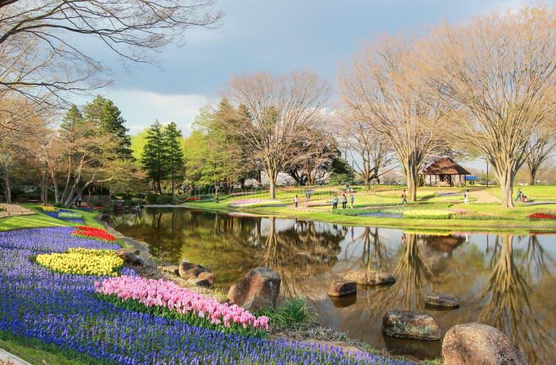 Giardino del tulipano a Showa Kinen KoenShowa Memorial Park, Tachikawa, Tokyo, Giappone in primavera fotografia stock