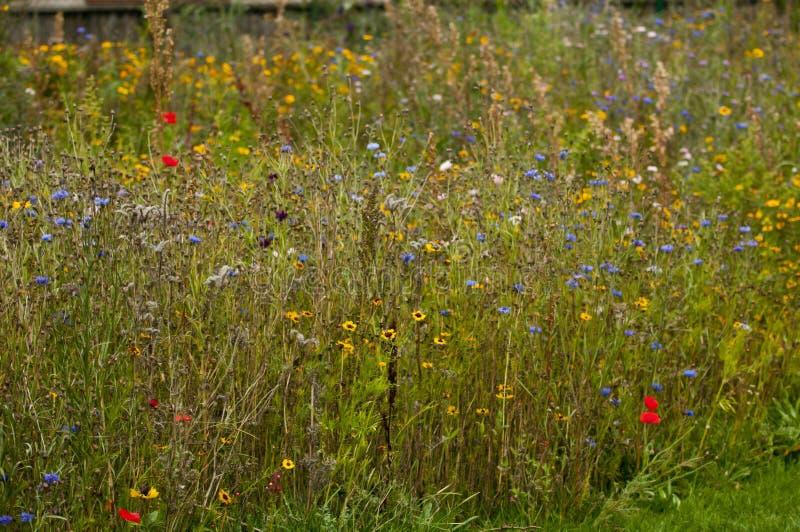 Giardino del Wildflower fotografia stock libera da diritti