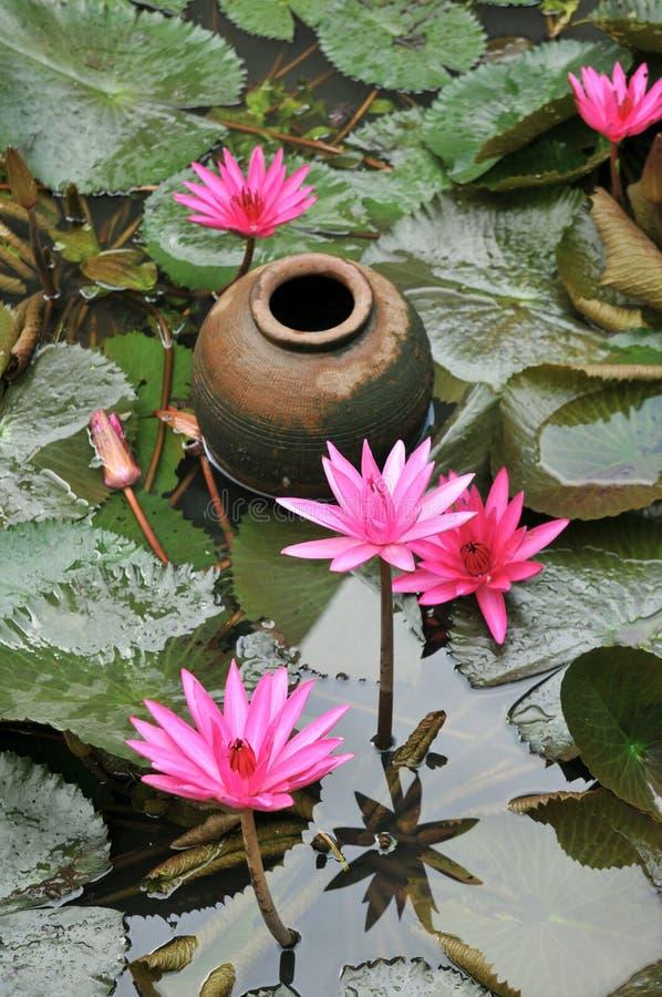 Download Giardino Dell'acqua, Tailandia Fotografia Stock - Immagine di pink, flora: 56881736