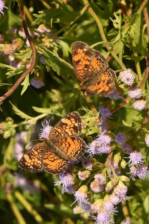 Giardino della farfalla fotografia stock