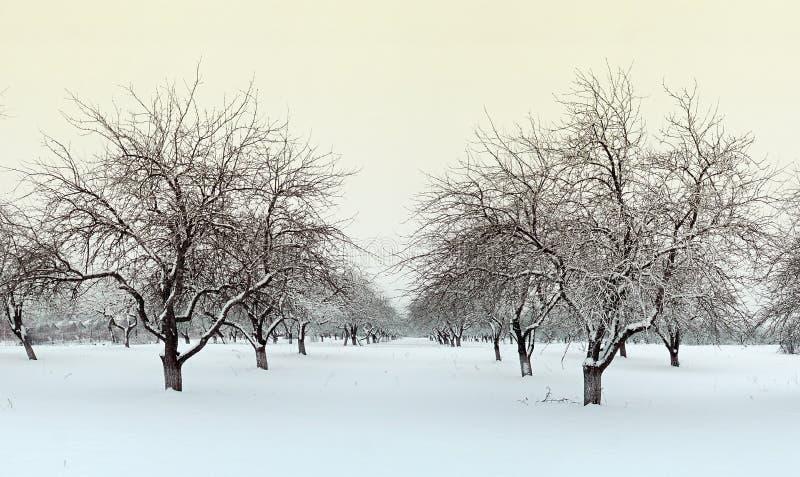 Giardino della mela di inverno immagini stock