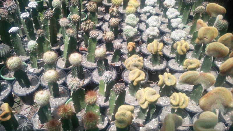 Giardino della pianta del cactus nella stagione invernale immagine stock