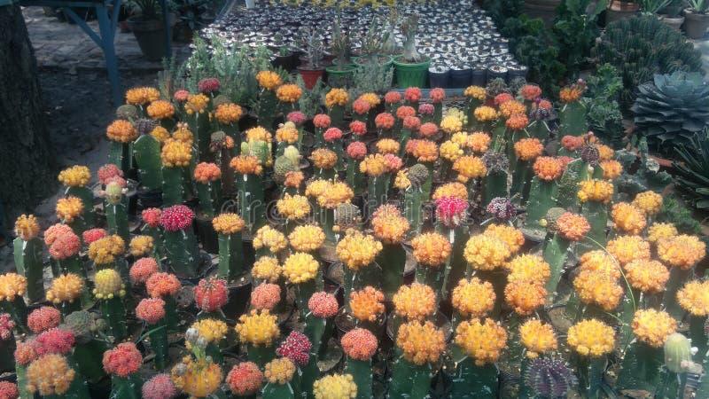 Giardino della pianta del cactus nella stagione invernale fotografia stock libera da diritti