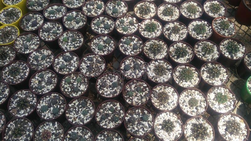 Giardino della pianta del cactus nella stagione invernale immagini stock libere da diritti