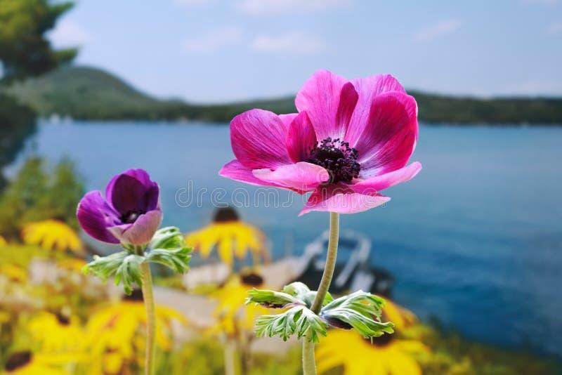 Giardino della riva del lago fotografia stock