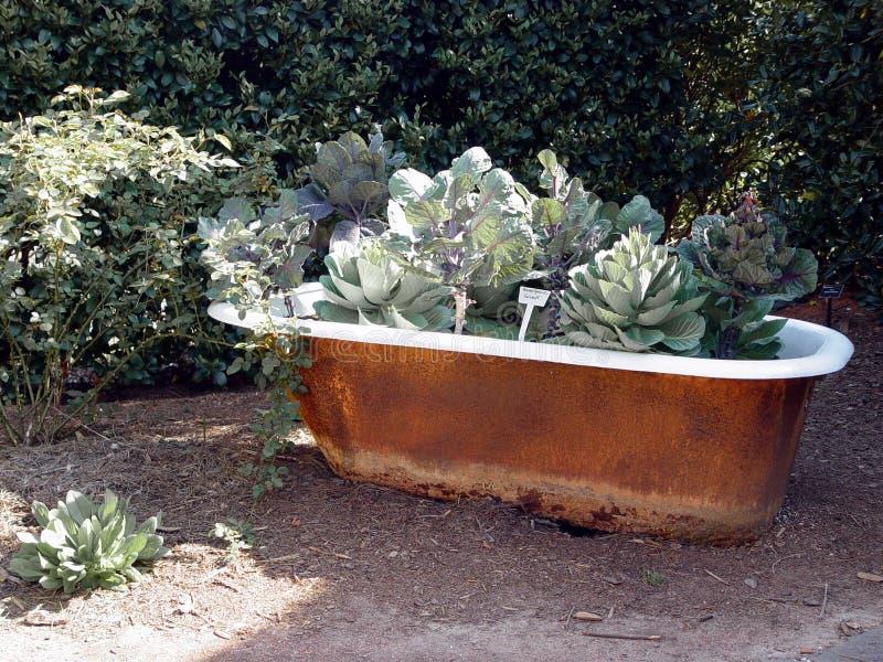 Giardino della vasca da bagno immagine stock immagine di for Vasca giardino