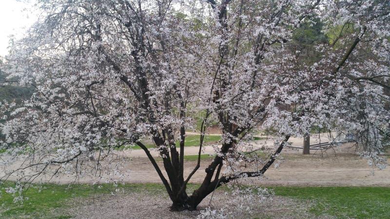 Giardino delle piante e dei fiori dell'albero della Spagna immagini stock libere da diritti