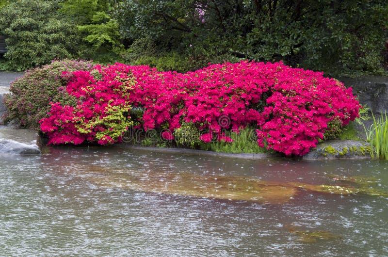 Giardino dello stagno della pioggia del fiore fotografia stock libera da diritti