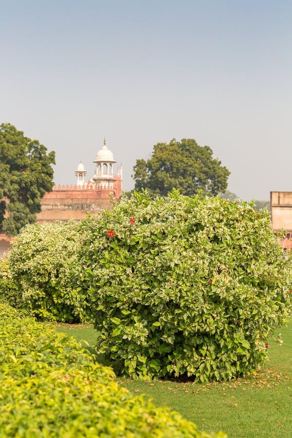 Giardino dentro la fortificazione di Agra, Agra, Uttar Pradesh, India fotografia stock libera da diritti