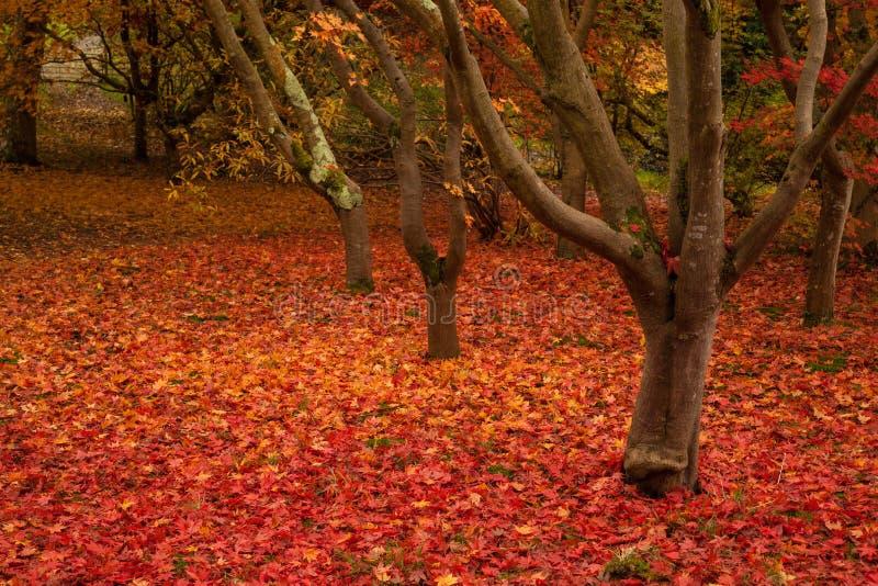 Giardino di Bodnant in autunno immagini stock libere da diritti