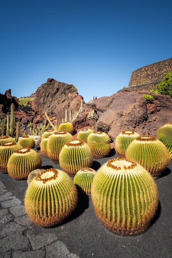 Giardino di Cactus con piante a Lanzarote, Isole Canarie, Spagna immagine stock libera da diritti