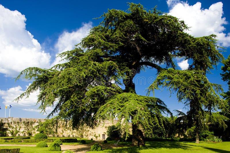 giardino di Chateau de Montreuil-Bellay, Pays-de-la-Loire, Francia fotografia stock libera da diritti