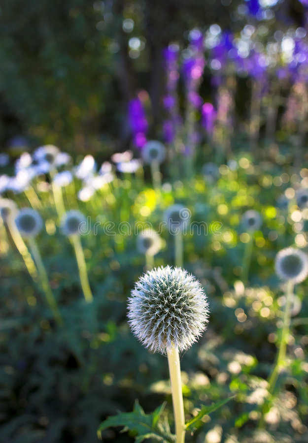 Giardino di estate fotografia stock libera da diritti