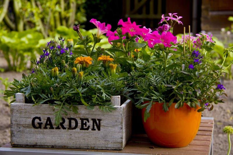 Giardino di fiore immagini stock libere da diritti