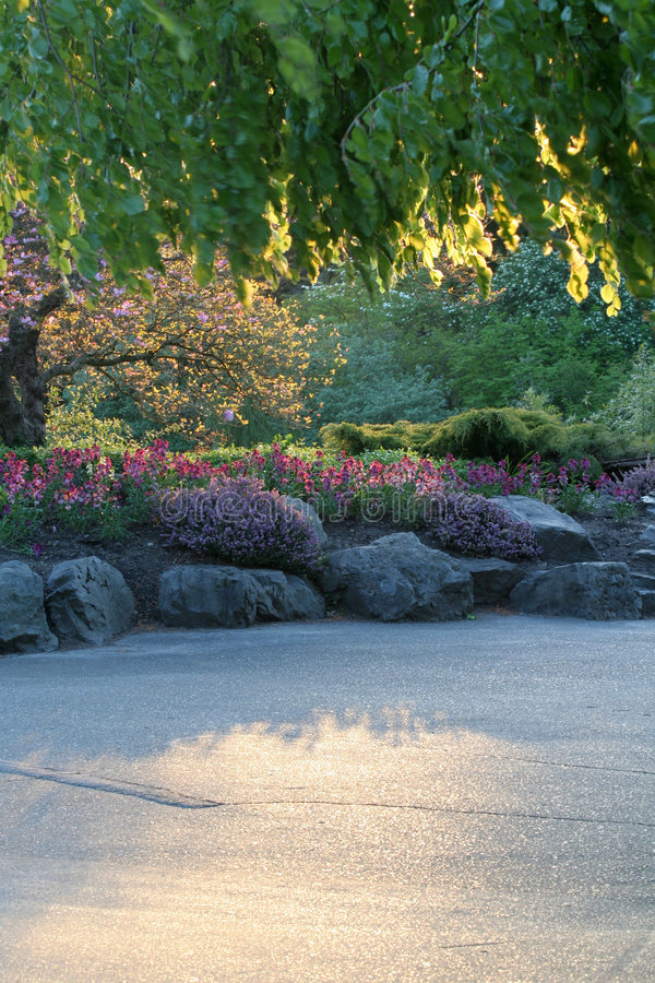 Giardino di fiore immagine stock