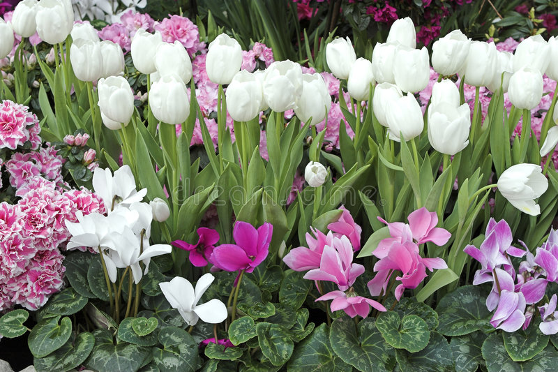 Giardino di fiore della sorgente immagine stock