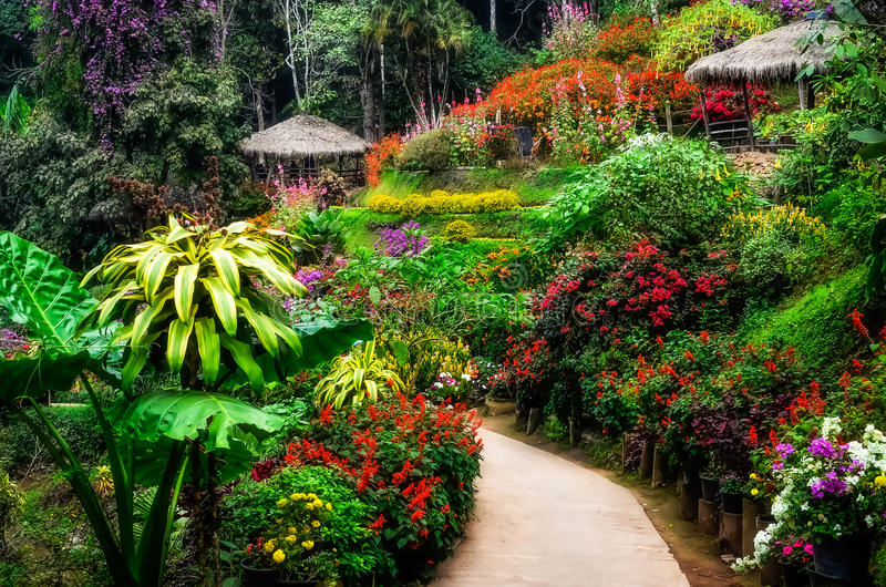 Giardino di fiore variopinto e pacifico abbellito in fiore fotografia stock libera da diritti