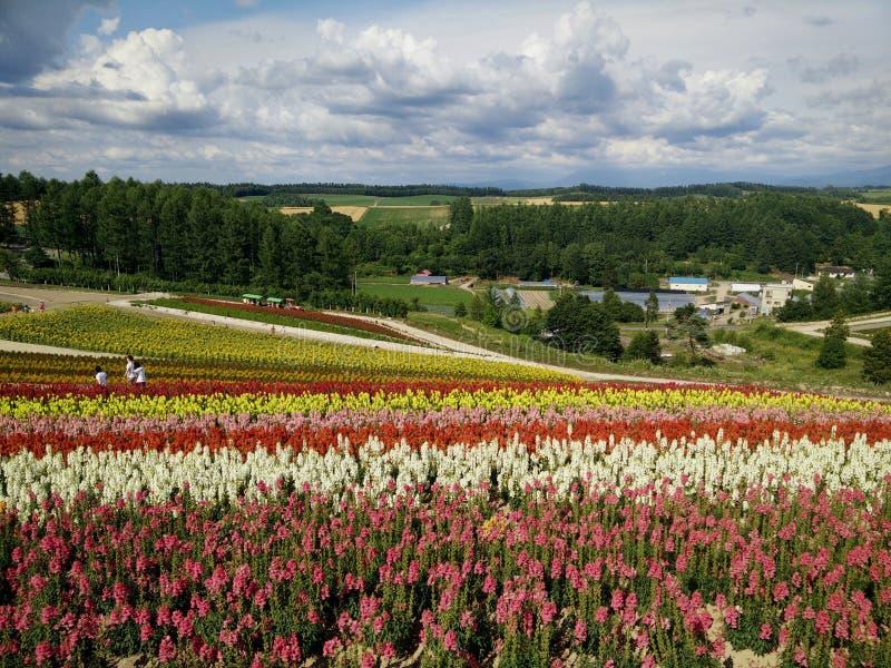 Giardino di fiori immagine stock