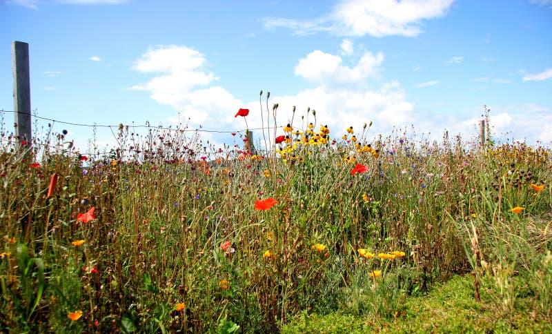 Giardino di fiori selvaggi   immagini stock libere da diritti