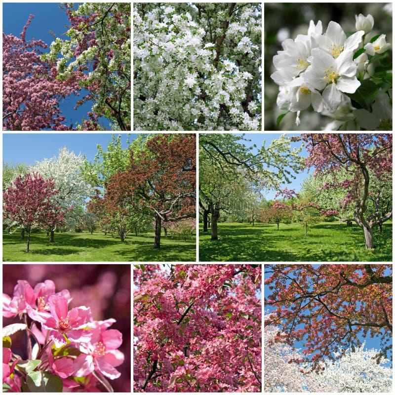 Giardino di fioritura in primavera fotografie stock