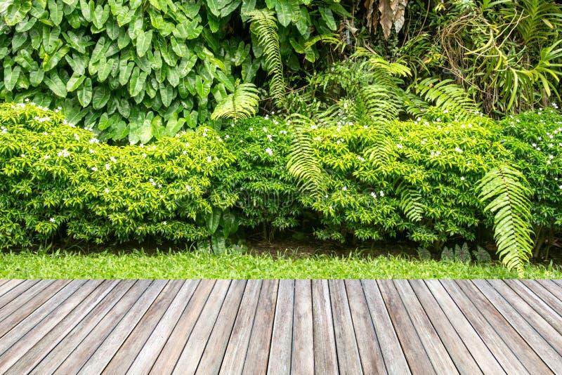 Giardino di legno della pianta e di decking fotografia stock