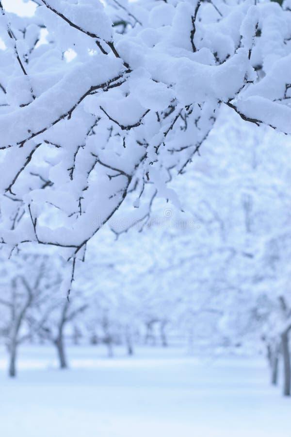 Giardino di melo di inverno fotografia stock libera da diritti