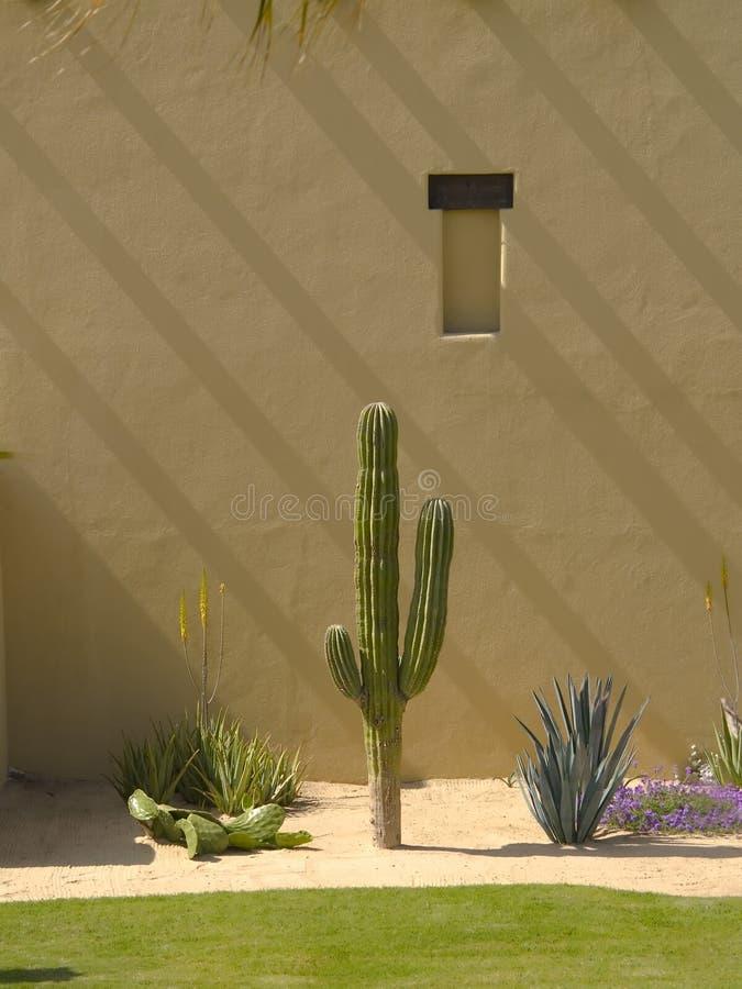 Giardino di paesaggio del cactus fotografie stock libere da diritti