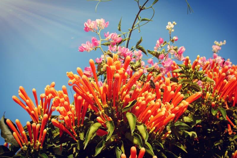 Giardino di pomeriggio dello scenario del sole dei fiori fotografia stock libera da diritti