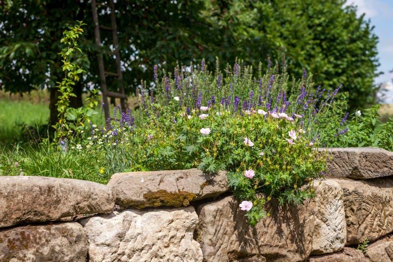 Giardino di rocce con i fiori fotografia stock immagine - Rocce da giardino ...