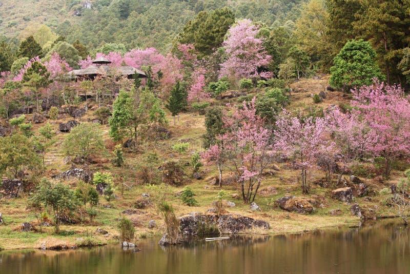 Giardino di Sakura fotografia stock