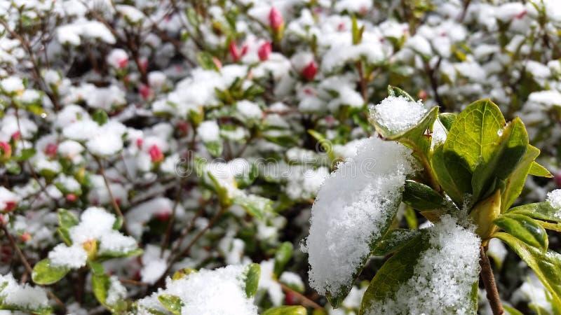 Giardino di Snowy immagini stock