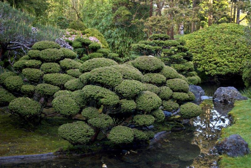 Giardino di tè giapponese - San Francisco fotografia stock