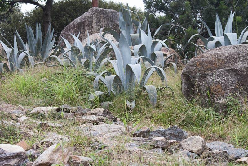 Giardino di Xeriscape a Caracas Venezuela immagini stock libere da diritti